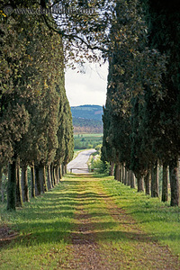 Tuscany_dirt_road